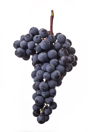 white wine: Dark bunch of grape in low light on white isolated background, macro shot, water drops