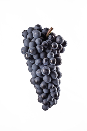 Dark bunch of grape in low light on white isolated background, macro shot, water drops