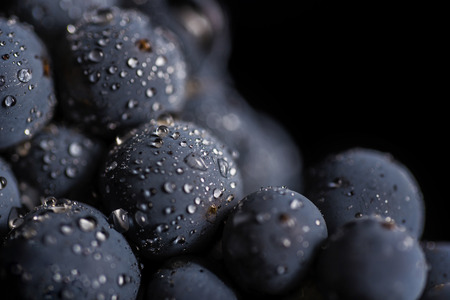 Dark bunch of grape in low light on black isolated background, macro shot, water drops