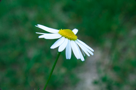 flower on low focus , sky background ,green Stock Photo