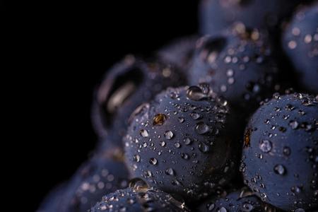 分離されたブドウの木、水滴、マクロ撮影、黒の背景、理想的なブドウの束