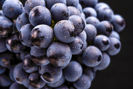 grape vines isolated , water drops ,macro shot , black background , ideal grapes bunch