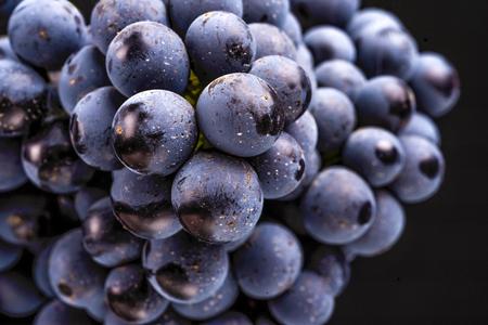 wijnstokken geïsoleerd, waterdruppels, macro-opname, zwarte achtergrond, ideaal druivenbos