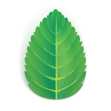 La foglia di menta verde con ombra Vettoriali