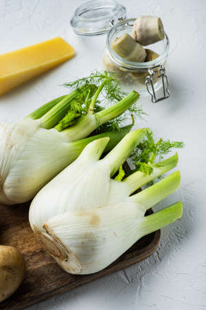 Fresh florence fennel bulb, on white textured background