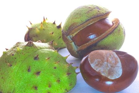 conkers: Beauty chestnut, macro shot, isolated