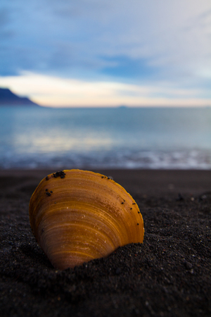 Shell on Black Sand Beach Iceland Banque d'images - 110560814