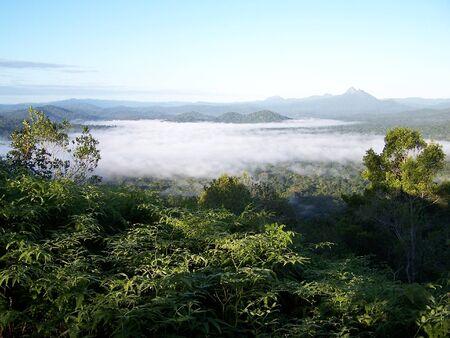 Rain Forest Morning Fog Stock Photo