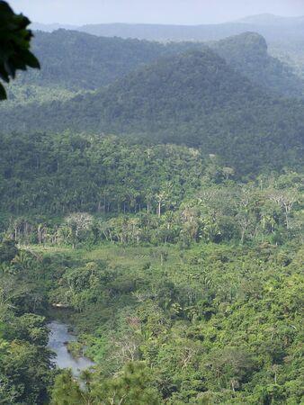 Belizeion Rain Forest