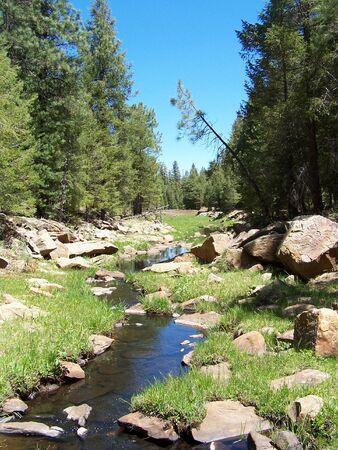 creek in woods Stock Photo