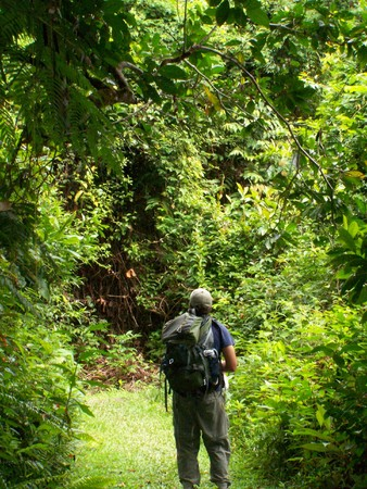 man standing in jungle Stock Photo