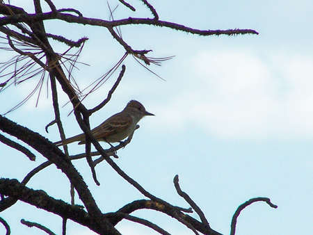 silhouette of bird in branches