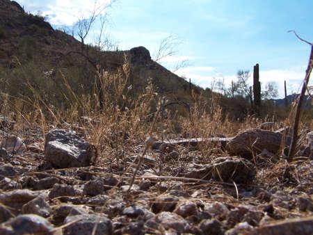 desert floor Stock Photo