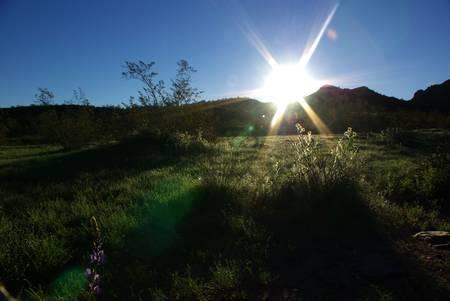 Sun Rise on the green desert