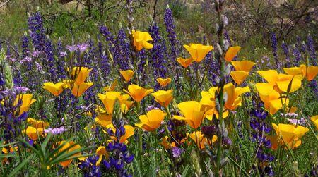 purple and orange wildflowers