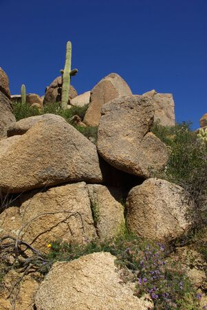 desert rocks saguaro Stock Photo