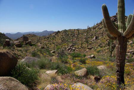 ocotillo: landscape, desert, bushes, blue sky, cacti, trail, arizona, nature, outdoors, outside, spring, flowers, hills , mountains, ocotillo