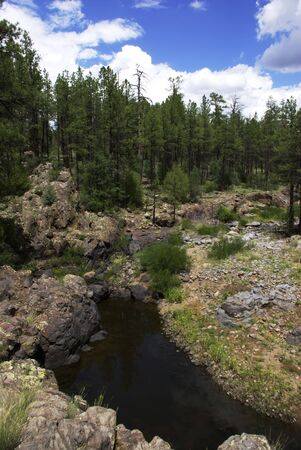 creek in small forest canyon