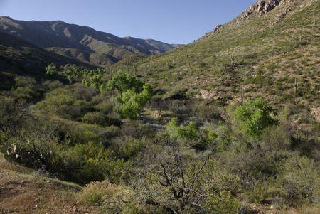 Riparian stream in the desert Stock Photo