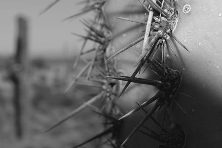 Black and White close up of cactus thorns Stock Photo