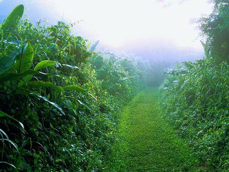 trail through the mist