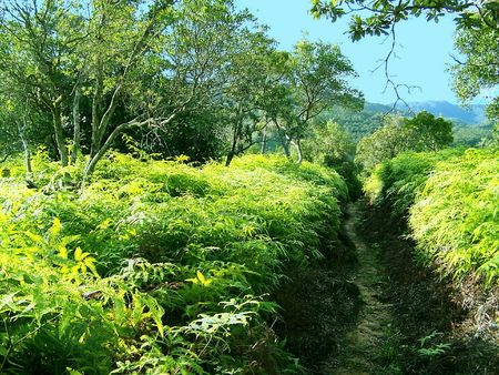 ferns along a trail in belize Stock Photo