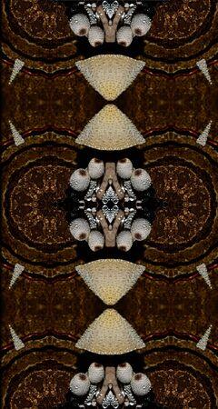 Mushroom Mirror Stock Photo
