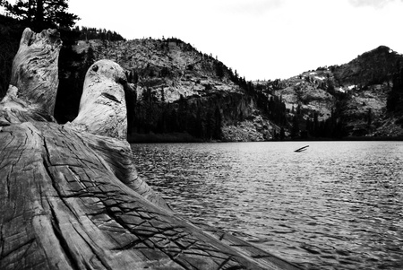 Log and the Lake Black and white