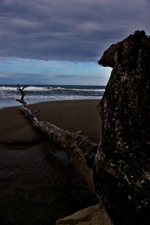 Drift wood on beach 2