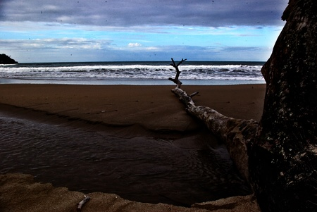 Drift wood on a tropical beach