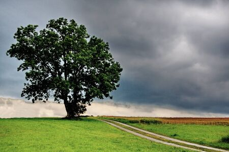 A free standing tree at the end of the Way Stock Photo