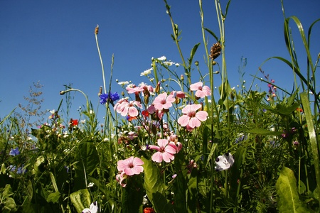 Field with flowers from the perspective of a mouse Stock Photo