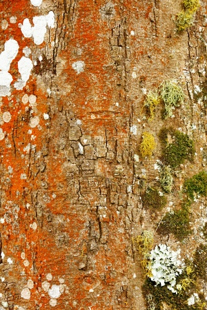 Bark, from the weather side of the tree Stock Photo - 10960166
