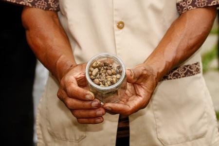 Bali coffee, shit coffee, luwak coffee