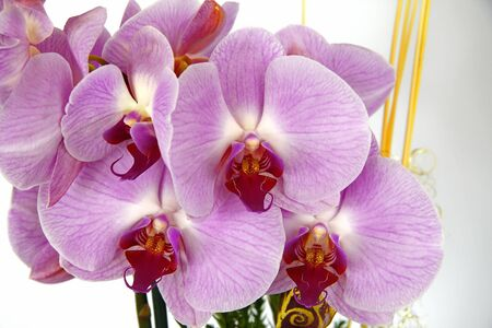knospe: Orchidee Orchid