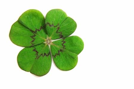 lucky clover: Clover