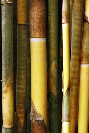 feng shui: thick bamboo poles