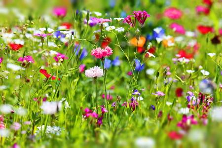 Prado de flores en verano con diferentes flores de colores. Este colorido esplendor Foto de archivo