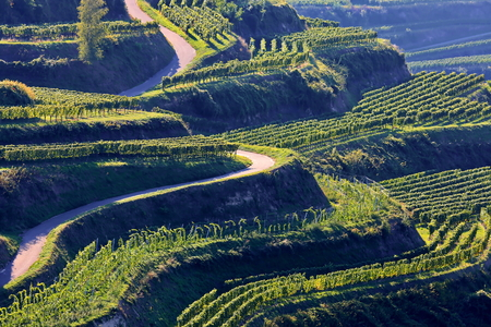Kaiserstuhl is a wine-growing region in Germany Imagens