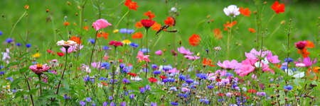 Colorful flower meadow in the primary color green with different wild flowers. Standard-Bild