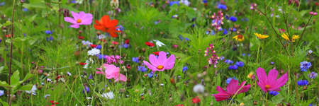 Colorful flower meadow in the primary color green with different wild flowers. Stock fotó