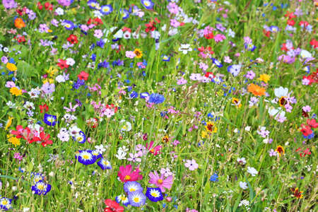 Colorful flower meadow in the primary color green with different wild flowers.
