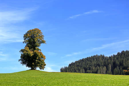 Detached tree on the green hill Standard-Bild