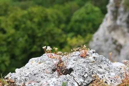 Amazon rock on the Hauser Wand near Bad Ãœberkingen