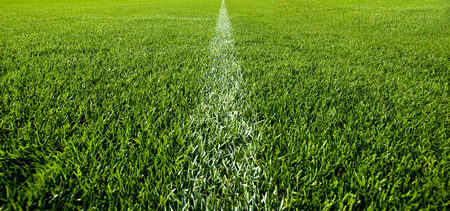 Green grass with white line of a football field