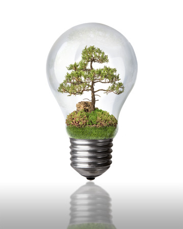 Tree in a light bulb on white with clipping path