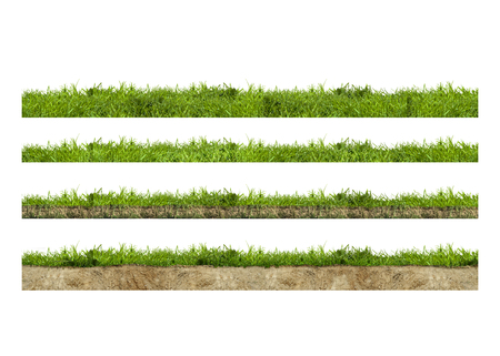 Layers of green grass section with soil isolated on white Zdjęcie Seryjne - 85252453