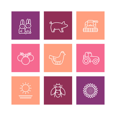 vermin: Farm, ranch line icons, rural machinery, agrimotor, harvester, hen, pig, rabbits, crop, vegetables, square icons isolated on white, illustration
