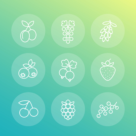 whortleberry: Berries line icons, raspberry, blueberry, cherry, grape, barberry, plums, strawberry, vector illustration