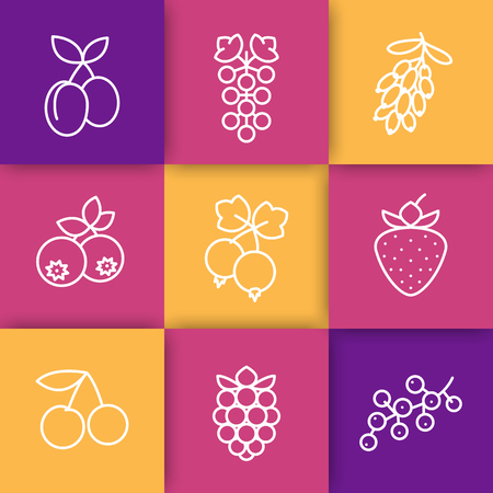 whortleberry: Berries line icons, raspberry, cherry, grape, strawberry, barberry, plums